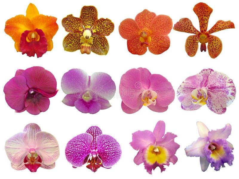 Colección de la orquídea imágenes de archivo libres de regalías