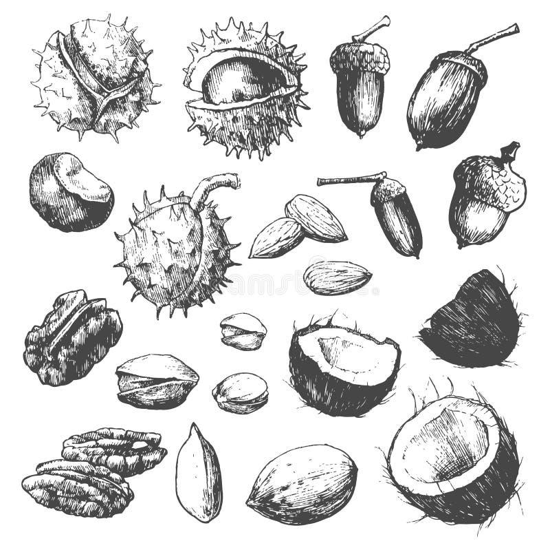 Colección de la tuerca. stock de ilustración