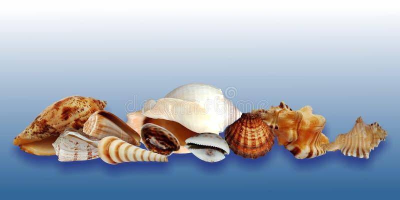 Colección de las cáscaras del mar aislada en fondo sombreado azul stock de ilustración