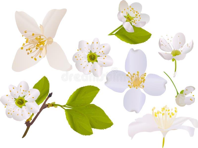 Colección de las flores del jazmín y del cerezo libre illustration