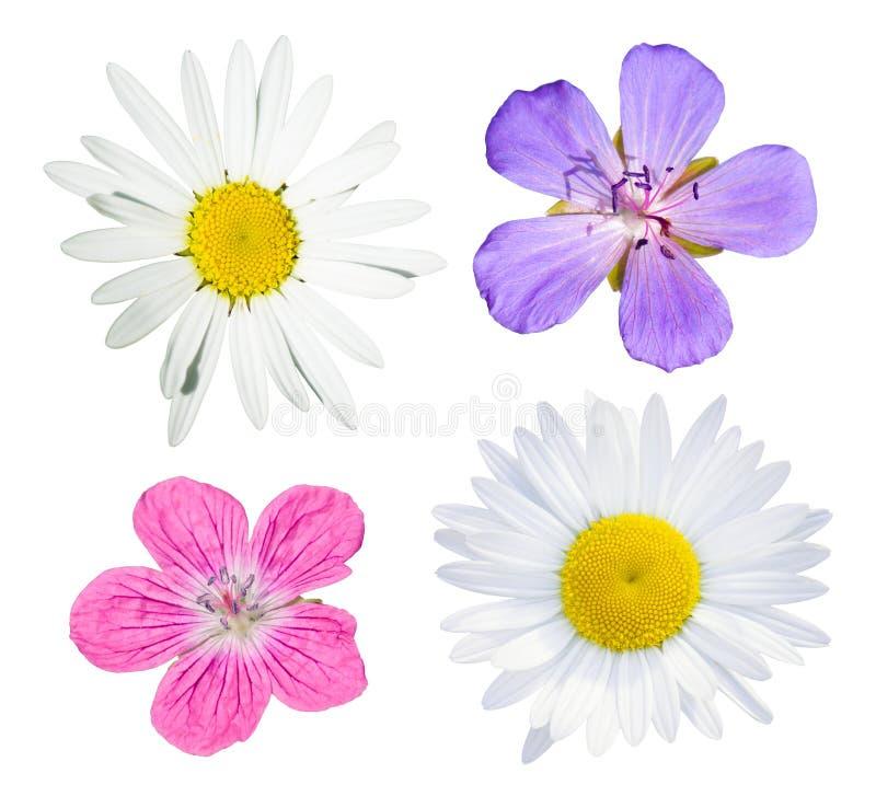Colección de las flores salvajes foto de archivo libre de regalías