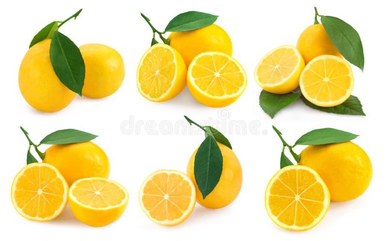 Colección de las frutas del limón fotos de archivo