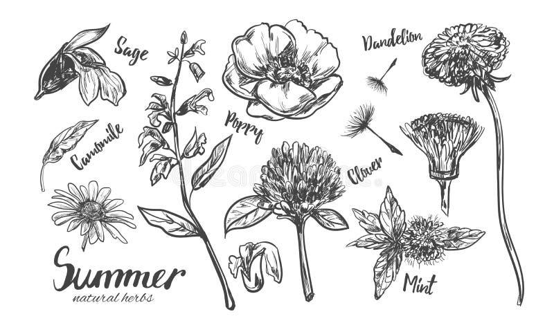 Colección de las hierbas y de las flores Mano del vector dibujada stock de ilustración