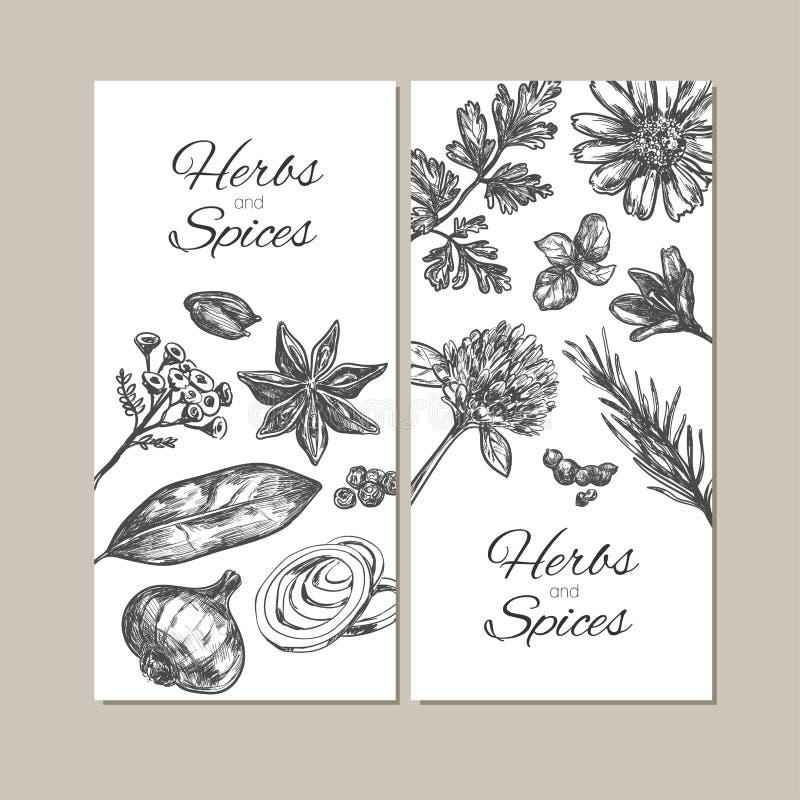 Colección de las hierbas y de las especias Banderas dibujadas mano del vector objetos libre illustration