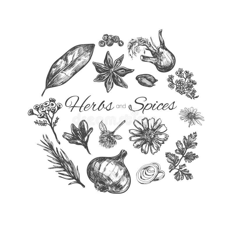 Colección de las hierbas y de las especias Ilustración drenada mano del vector Objetos aislados libre illustration