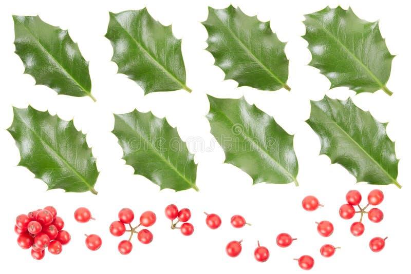 Colección de las hojas y de las bayas del acebo imagen de archivo