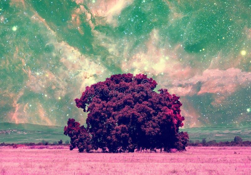 Colección de los árboles del espacio fotografía de archivo