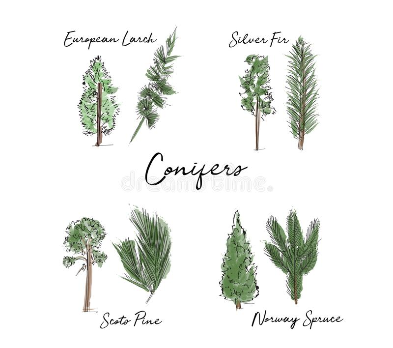 Colección de los árboles y de las hojas de la acuarela bosquejo dibujado mano del árbol forestal y de la hoja stock de ilustración