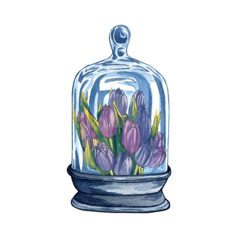Colección de los florariums, botellas de vidrio de la acuarela con las flores dentro ilustración del vector