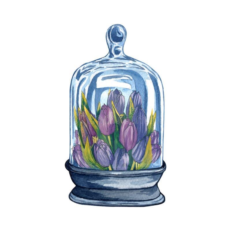 Colección de los florariums, botellas de vidrio de la acuarela con las flores dentro libre illustration