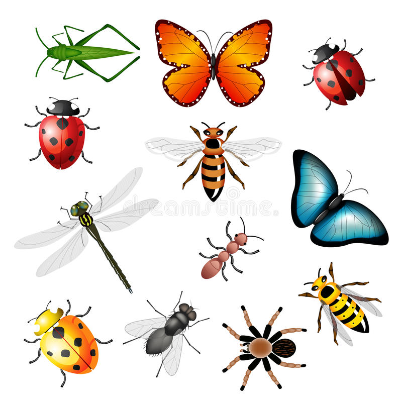 Colección de los insectos 2 stock de ilustración