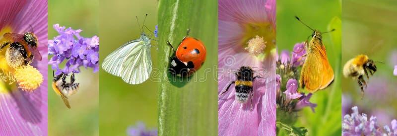 colección de los insectos en las flores en verano fotos de archivo