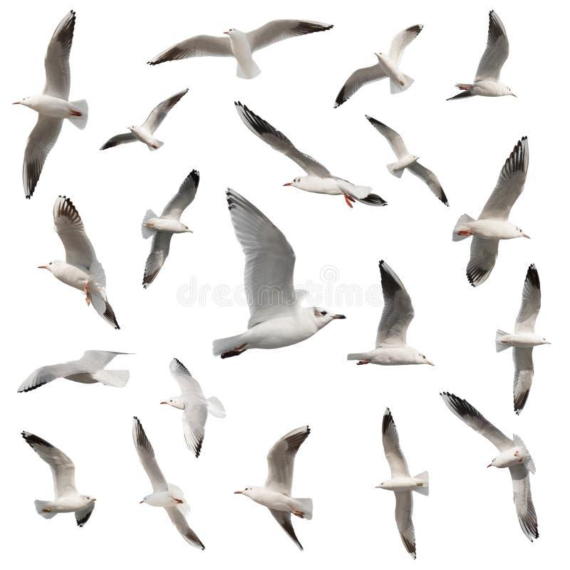 Colección de los pájaros aislada foto de archivo