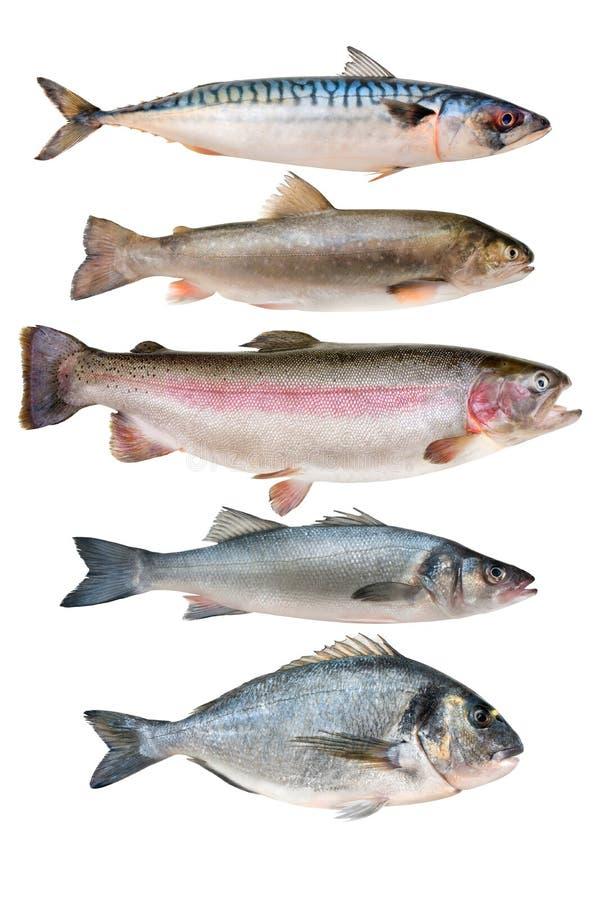 Colección de los pescados imagen de archivo