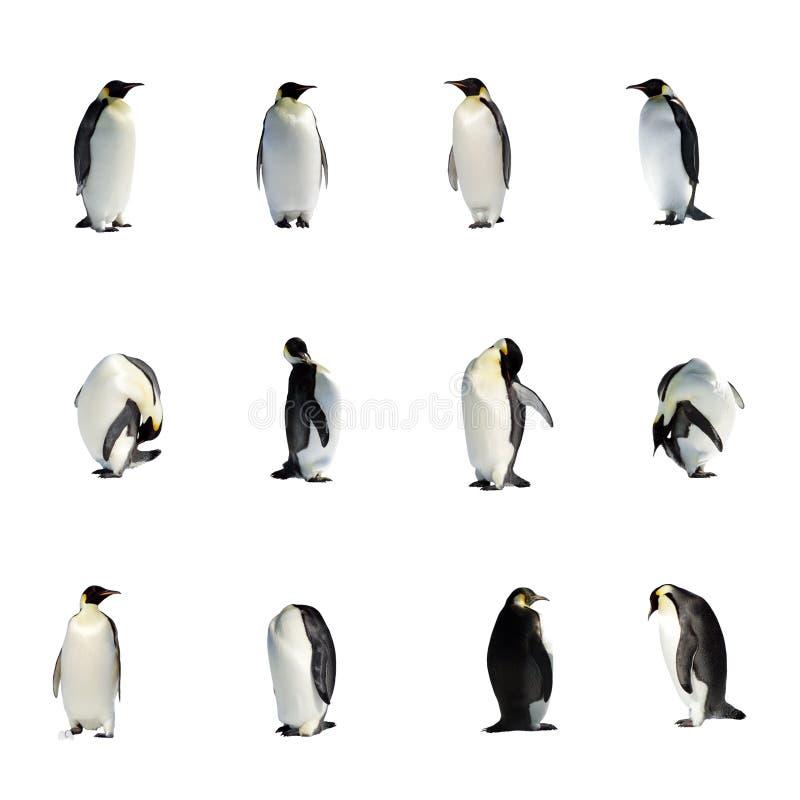 Colección de los pingüinos imágenes de archivo libres de regalías