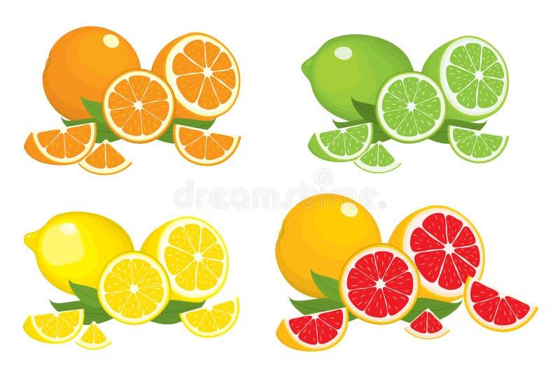 Colección de los productos de la fruta cítrica - naranja, limón, cal y pomelo con las hojas, aisladas en el fondo blanco ilustración del vector
