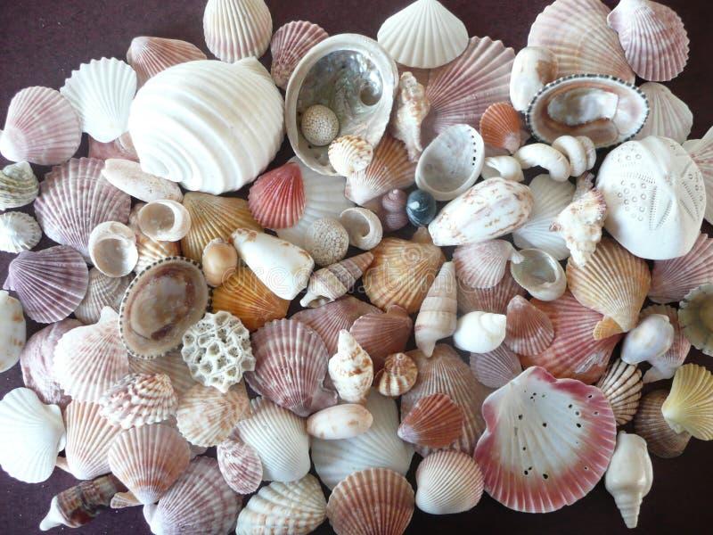 Colección de los shelles. fotografía de archivo libre de regalías