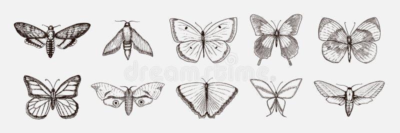 Colección de mariposa o de insectos salvajes de las polillas Símbolo o entomológico místico de la libertad vintage dibujado mano  ilustración del vector