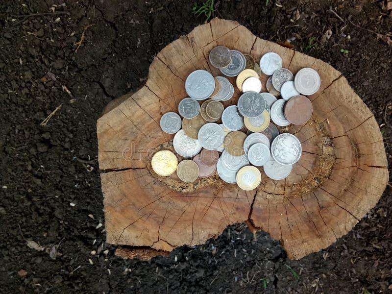 colección de monedas viejas en tocón de árbol viejo imagenes de archivo