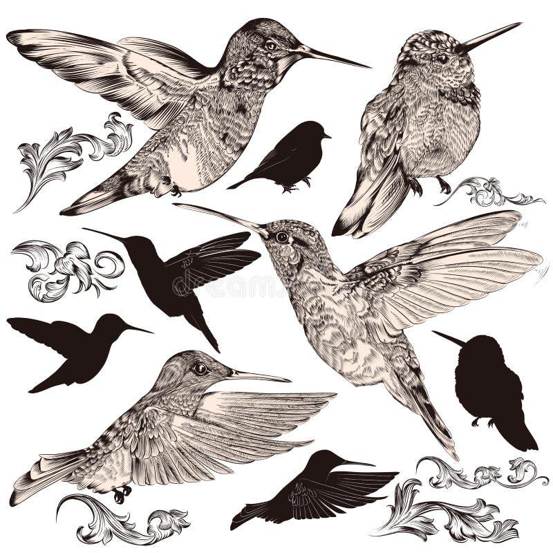 Colección de pájaros arriba detallados del tarareo del vector stock de ilustración