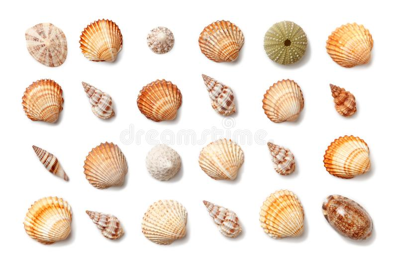 Colección de pequeñas cáscaras exóticas aisladas en un fondo blanco fotografía de archivo