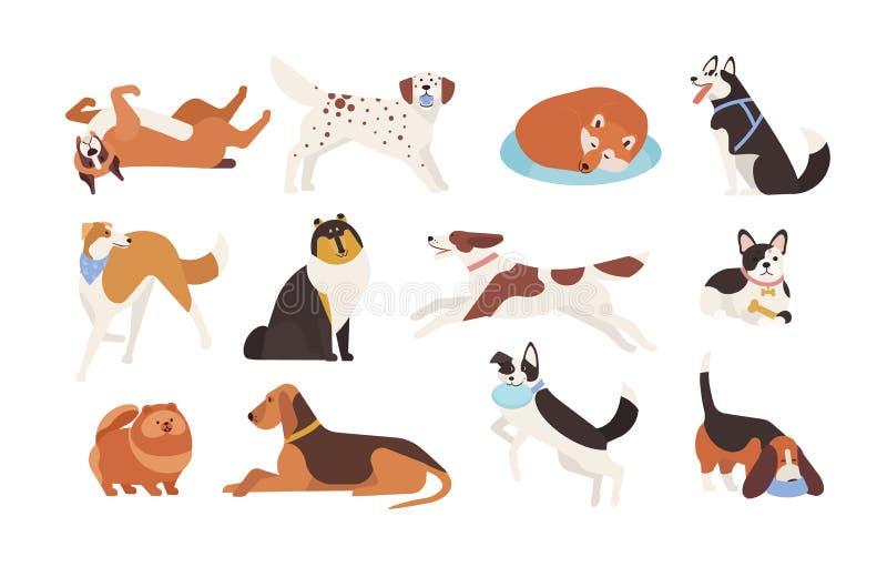Colección de perros divertidos de las diversas razas que juegan, durmiendo, mentira, sentándose Sistema del animal doméstico lind stock de ilustración