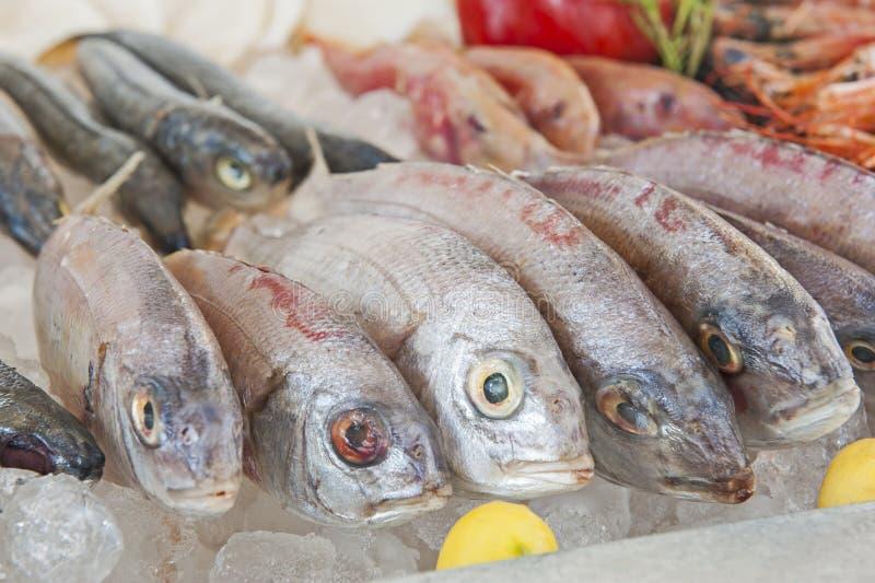 Colección de pescados de la brema en la exhibición en restaurante de los mariscos imagenes de archivo