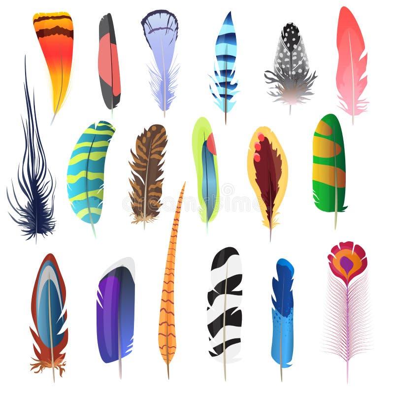 Colección de plumas de pájaro detalladas del color fijadas Elementos de la decoración Ilustración del vector stock de ilustración