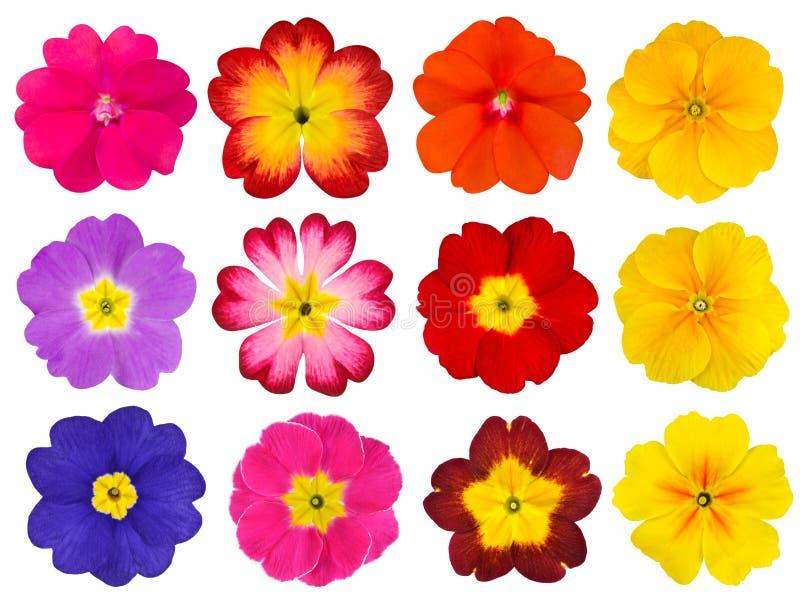 Colección de primaveras coloridas aisladas en blanco imagenes de archivo