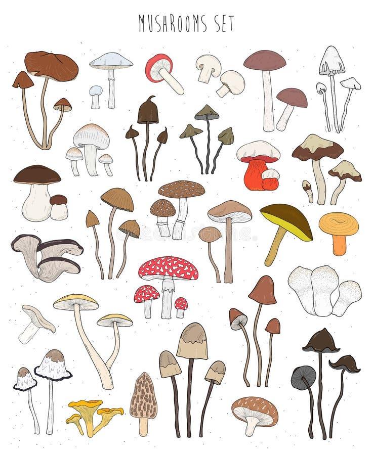 Colección de setas coloridas dibujadas mano Fije comestible aislada stock de ilustración