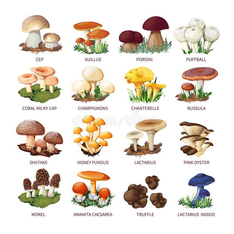 Colección de setas y de setas comestibles ilustración del vector