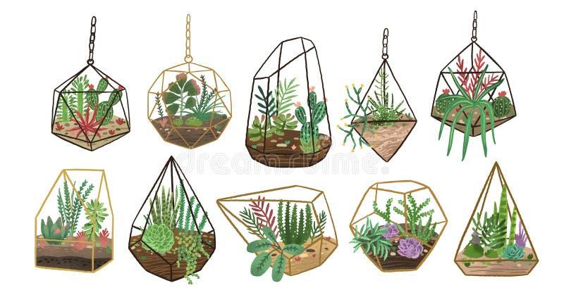 Colecci?n de succulents, de cactus y de otras plantas de desierto creciendo en diversos viveros o florariums de cristal stylish ilustración del vector