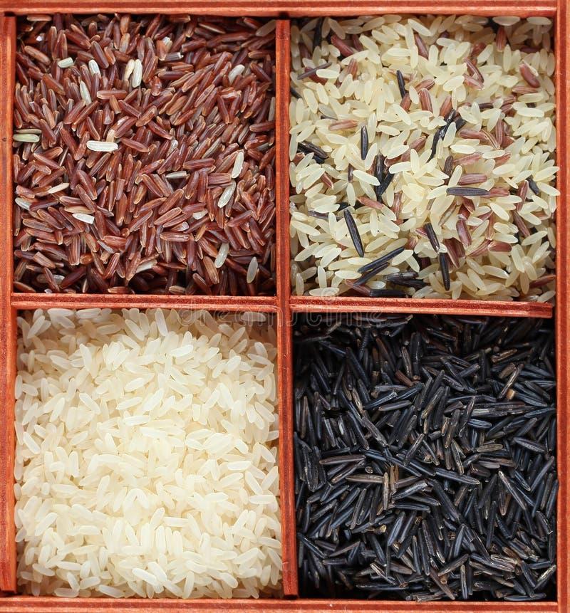 Colección del arroz fotografía de archivo libre de regalías