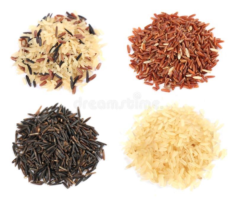 Colección del arroz imagenes de archivo
