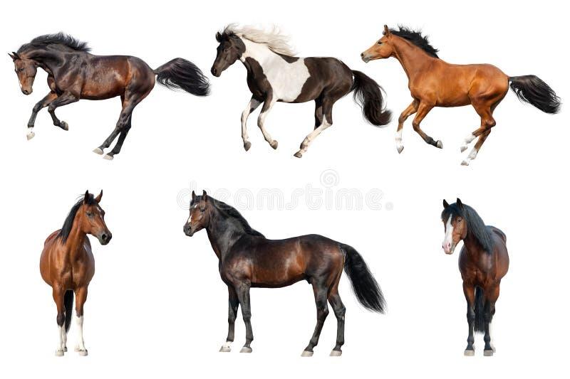 Colección del caballo aislada foto de archivo