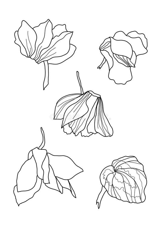 Sistema del dibujo de la pluma de los Cyclamens libre illustration