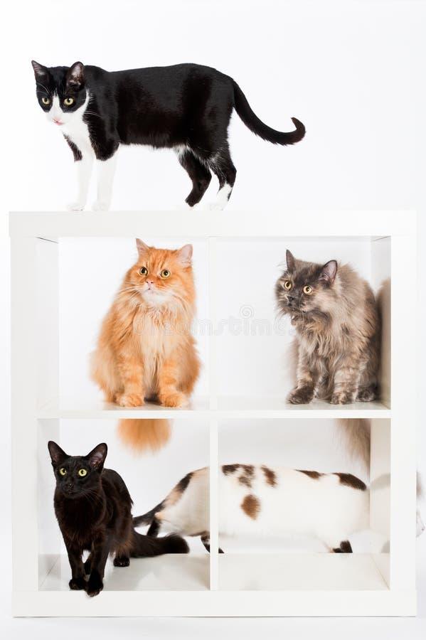 Colección del gato fotos de archivo libres de regalías