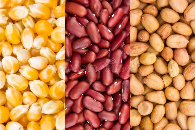Download Colección del grano imagen de archivo. Imagen de grueso - 41913913
