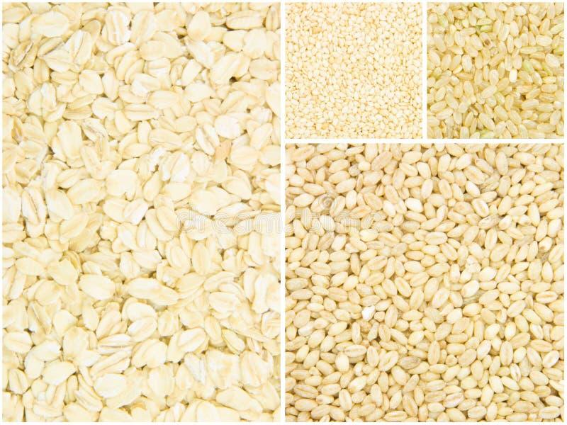 Download Colección del grano imagen de archivo. Imagen de tuerca - 41914197