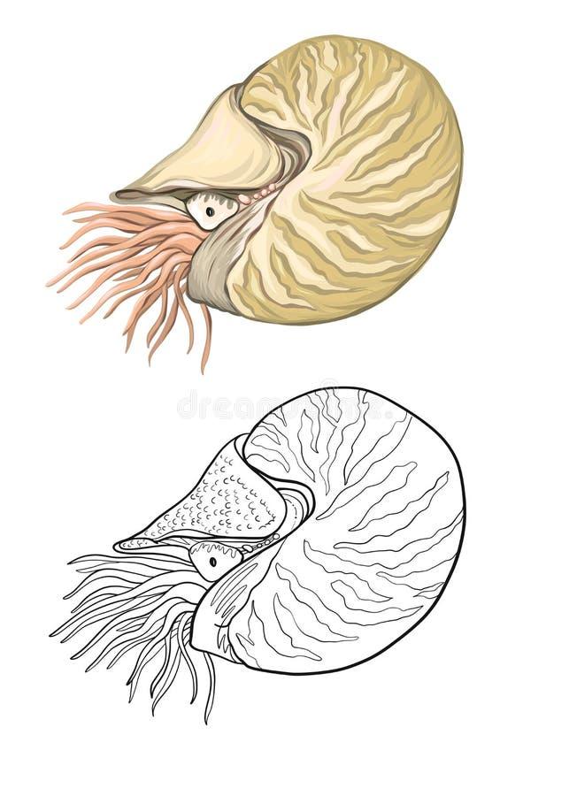 Colección del mar Ejemplo coloreado dibujado mano original ilustración del vector
