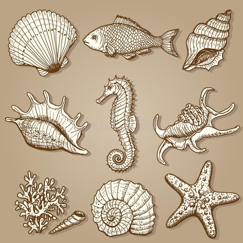 Colección del mar. Ejemplo dibujado mano original fotografía de archivo libre de regalías