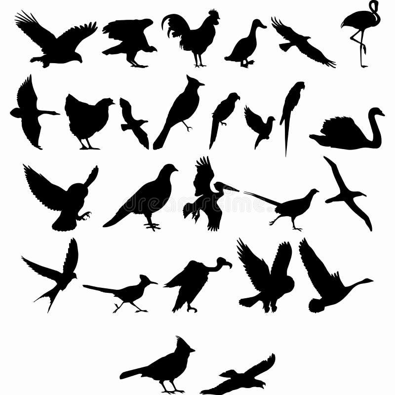 Colección del pájaro del vector para todo el diseñador stock de ilustración