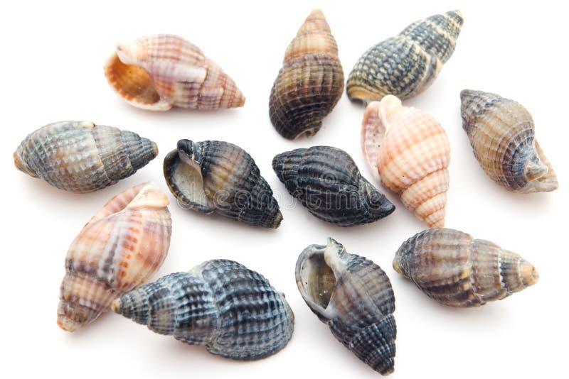 Colección del Seashell imagen de archivo