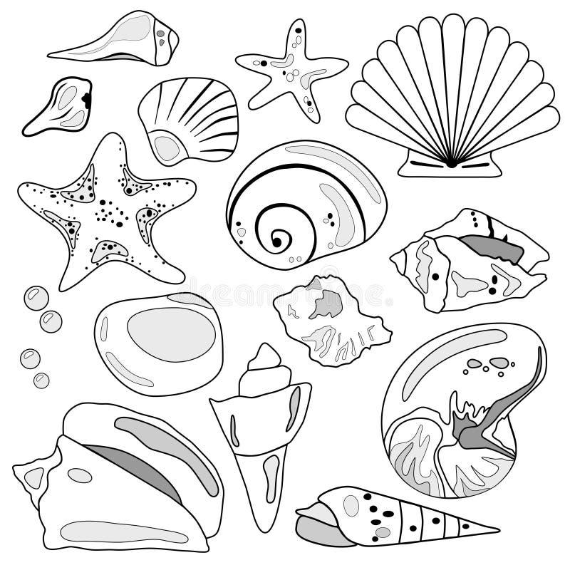 Colección del shell del mar ilustración del vector