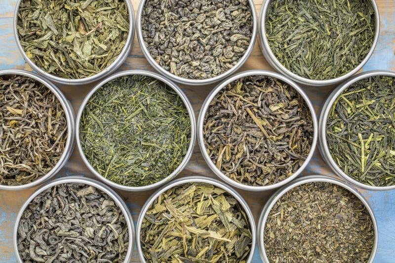Colección del té verde de las hojas intercambiables imagen de archivo
