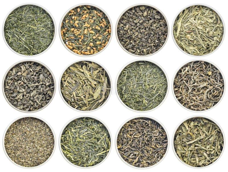 Colección del té verde de las hojas intercambiables imagenes de archivo
