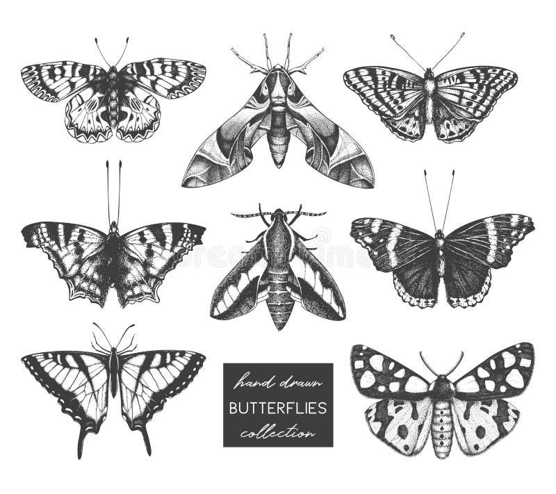 Colección del vector de altos bosquejos detallados de los insectos Ejemplos exhaustos de las mariposas de la mano en el fondo bla ilustración del vector