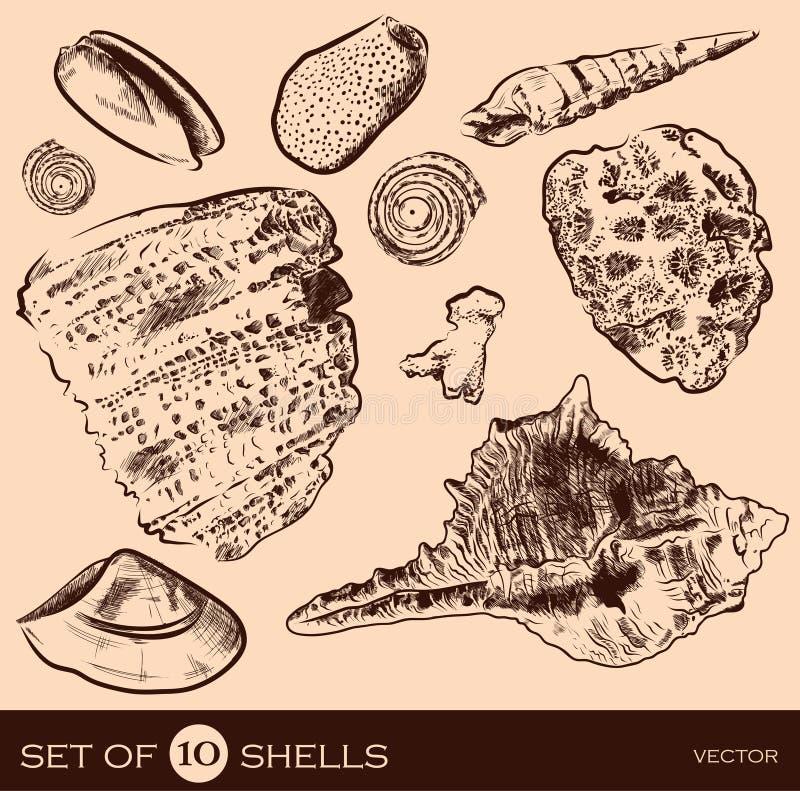 Colección del vector de la cáscara del mar Mano original drenada stock de ilustración
