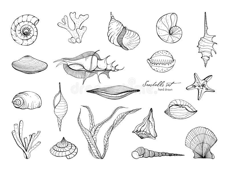 Colección dibujada mano de las conchas marinas Sistema de alga marina, coral, estrella de mar, cáscara Ejemplo blanco y negro del stock de ilustración
