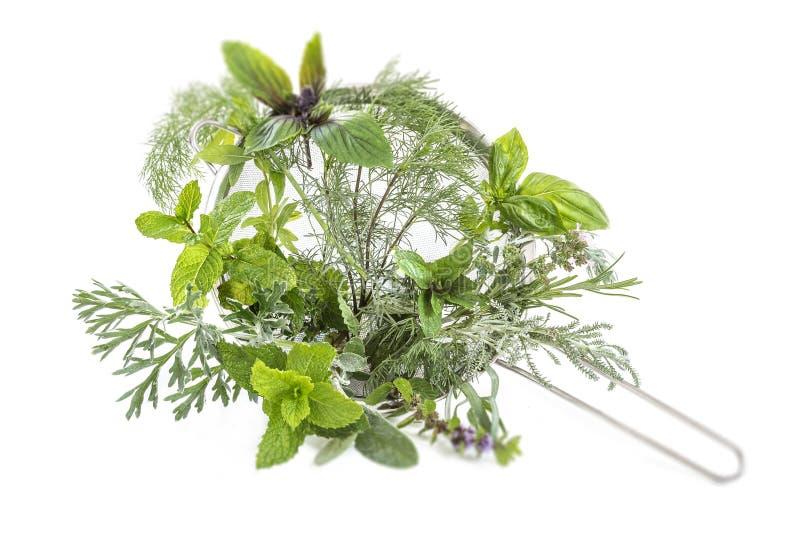 Colección en las hierbas de la medicina herbaria en un tamiz del metal en un fondo blanco fotografía de archivo libre de regalías